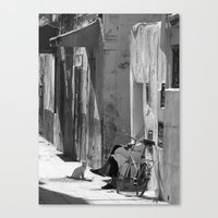 Man And Cat Marrakesh Canvas Print