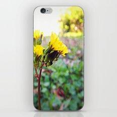 Yellow flowers! iPhone & iPod Skin
