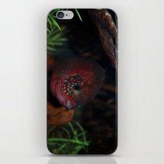 Jewel Cichlid- Red fish iPhone & iPod Skin