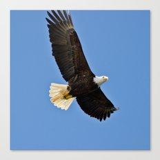 Freedom Eagle (color) Canvas Print