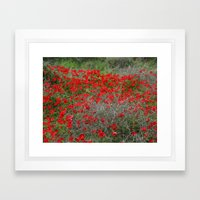 Beautiful Red Wild Anemone Flowers In A Spring Field  Framed Art Print