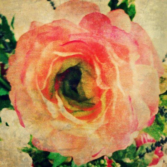 Study of a Rose Art Print