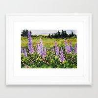Lupines of Nova Scotia Framed Art Print