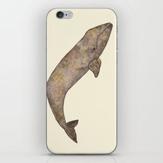 Gray Whale iPhone & iPod Skin