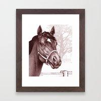 Stare Of The Stallion Framed Art Print