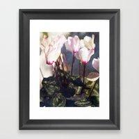 Cyclamen Framed Art Print