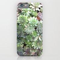 Desert Flower I iPhone 6 Slim Case