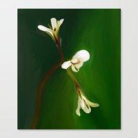 wild geranium - Free shipping Canvas Print