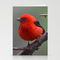 Scarlet Tanager - A Natu… Stationery Cards