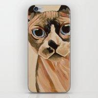 Hairless Sphynx Cat iPhone & iPod Skin