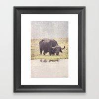 Buffalo From Botswana Framed Art Print