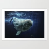 Beluga Whale Art Print