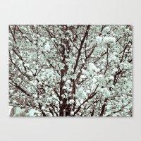 Winter Petals Canvas Print