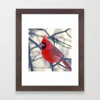 Male Northern Cardinal Framed Art Print