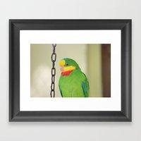 Chained Parrot Framed Art Print