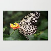 White Butterfly On Flowe… Canvas Print