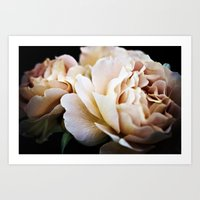 Estella Havisham Rose Art Print