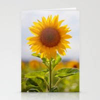 Sonnenblume Stationery Cards