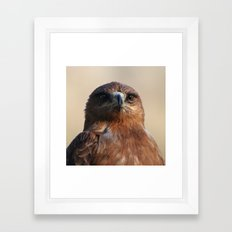 Tawny Eagle Framed Art Print
