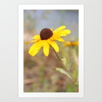 The Wild Black Eyed Susan Art Print