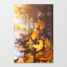 sun soaked autumn Canvas Print