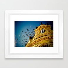 Birds on a Building, Sibiu, Romania Framed Art Print