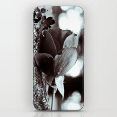 Bokeh rose iPhone & iPod Skin