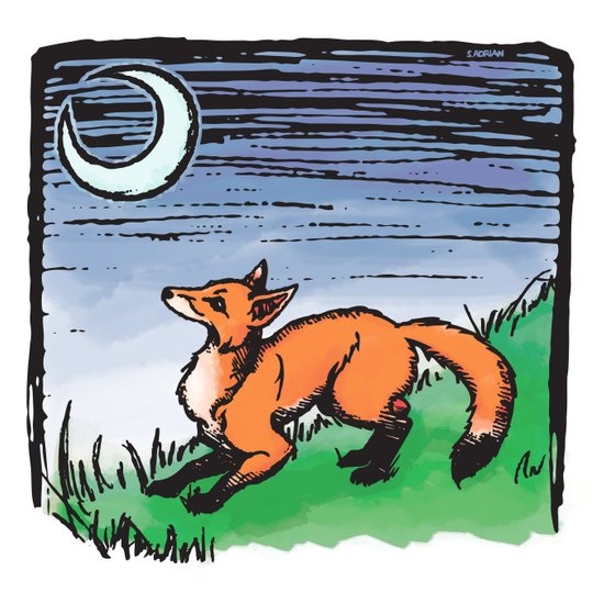 Fox and the Moon Art Print