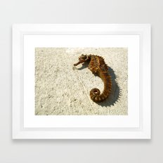 Seahorse Seahell Framed Art Print
