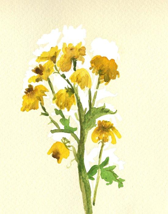 Chrysanthemum 2 Canvas Print