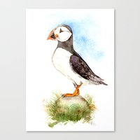 Puffin On A Rock Canvas Print