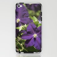 Longwood Gardens - Sprin… iPhone & iPod Skin
