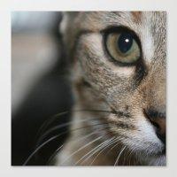 Eye Of A Tiger... Canvas Print