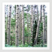 Telluride Forest Art Print