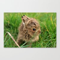 Leveret In The Grass Canvas Print