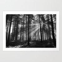 Light Shafts Art Print