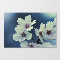 Blossoming - Beautiful Spring Blooms Canvas Print