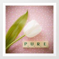 Pure - White Tulip Art Print
