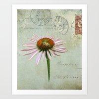 coneflower & bee postale Art Print