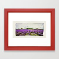Lavender Fields. Framed Art Print