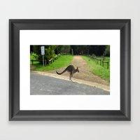 Flying Kangaroo Framed Art Print
