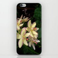 Mother Of Pearl Orchids iPhone & iPod Skin