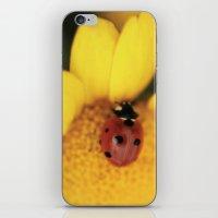 Ladybug on yellow flower - macro still life - fine art photo for interior decor iPhone & iPod Skin