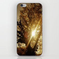 Sunset Behind the Tree iPhone & iPod Skin