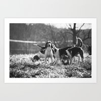 Foxhound Art Print