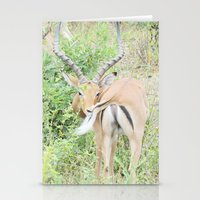 Gazelle Stationery Cards
