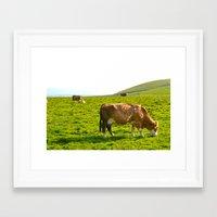Cow Field Framed Art Print