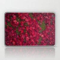 Red Maple Laptop & iPad Skin