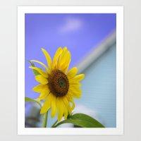 Summer Cottage Sunflower Art Print