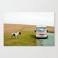 Dartmoor Pony Fancies an Ice Cream Canvas Print